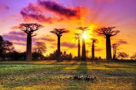 Paysage Madagascar